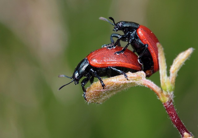 Beetle, Insect, Nature, Summer - Free image - 248481